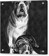 Grandson Of Sampson Acrylic Print
