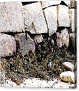 Granite And Seaweed Acrylic Print