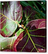 Grape Leaf Sheen Acrylic Print