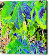 Grape Leaves Acrylic Print