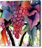 Grapes IIi Acrylic Print