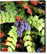Grapes With Leaves - Too Acrylic Print