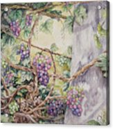Grapevine Laurel Lakevineyard Acrylic Print