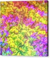 Graphic Rainbow Colorful Garden Acrylic Print