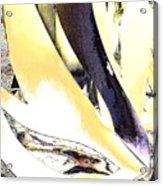 Graphics2 Acrylic Print