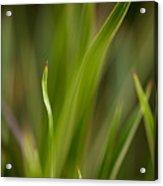 Grass Abstract 1 Acrylic Print