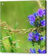 Grass And Flower  Acrylic Print