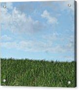 Grass And Sky, Barbados 2009 Acrylic Print