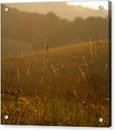 Grass And Sunshine Acrylic Print
