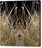 Grass Chief Acrylic Print