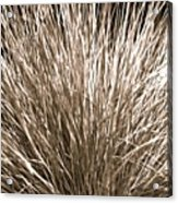 Grass Explosion Acrylic Print