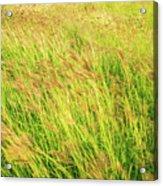 Grass Field Landscape Illuminated By Sunset Acrylic Print