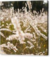 Grass Field Acrylic Print