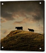 Grass Is Greener On The Other Side Acrylic Print