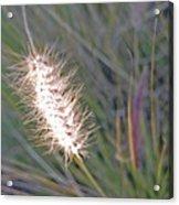 Grass Light Acrylic Print