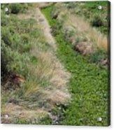 Grass Path Acrylic Print