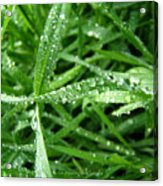Grass Plus Water Acrylic Print