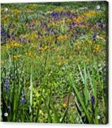 Grass Screen Acrylic Print