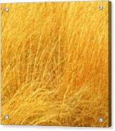 Grass Shades Acrylic Print by Kim Zwick