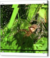 Grass Spider Acrylic Print