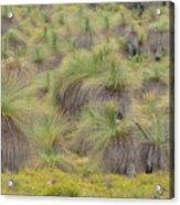 Grass Tree Acrylic Print