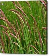 Grass3 Acrylic Print