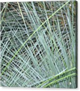 Grasses 1 Acrylic Print