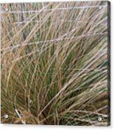 Grasses 5 Acrylic Print