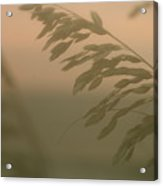 Grasses And Mist Acrylic Print