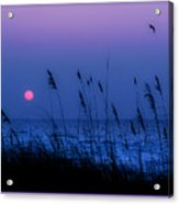 Grasses Frame The Setting Sun In Florida Acrylic Print