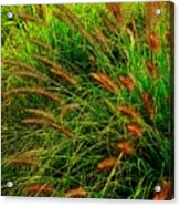 Grasses In The Verticle Acrylic Print