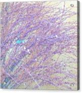 Grasses Toward The Sun Acrylic Print