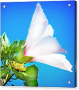 Grasshopper And Blue Sky Acrylic Print