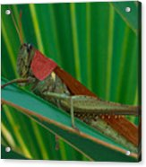 Grasshopper On Palm Leaf Acrylic Print