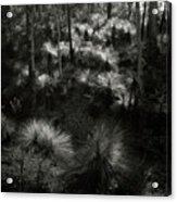 Grasstrees Acrylic Print