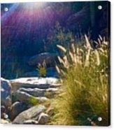 Grassy Sun Rays Acrylic Print
