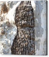 Gray Bark Abstract Acrylic Print