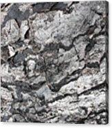 Gray Bark Acrylic Print