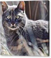Gray Cat In Woods Acrylic Print