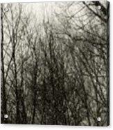 Gray Dawn Acrylic Print