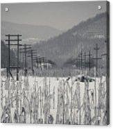 Gray Day Acrylic Print