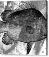 Gray Fish Acrylic Print