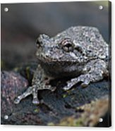 Gray Treefrog On A Log Acrylic Print