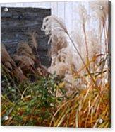 Gray Wall Acrylic Print