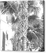 Grayscale Palm Trees Pen And Ink Acrylic Print