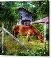 Grazin' In The Grass Acrylic Print