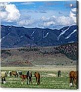 Grazing Herd Acrylic Print