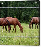 Grazing Horses - Cades Cove - Great Smoky Mountains Tennessee Acrylic Print