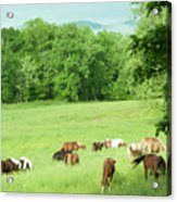 Grazing In The Morning Acrylic Print