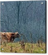 Grazing In Winter Acrylic Print